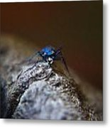 Cicindellidae Face To Face Metal Print