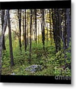 Cinematic Style Back Woods At Sunset Metal Print