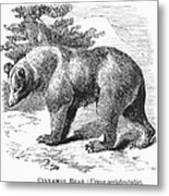 Cinnamon Bear Metal Print