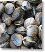 Clam Shell Background Metal Print