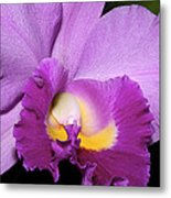 Classic Purple Orchid Metal Print