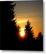 Clearing The Trees In The Morning Metal Print