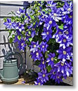 Clematis And Watering Can Metal Print
