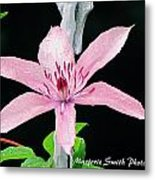 Clematis Lavender On Black Metal Print