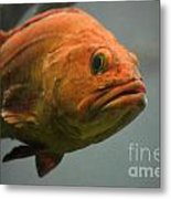 Close And Fishy Metal Print