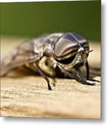 Close Encounter With A Horsefly Metal Print by Dean Bennett