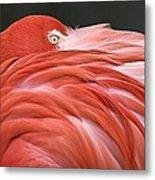 Close Up Of A Flamingo Resting Its Head Metal Print