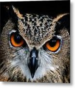 Close Up Of An African Eagle Owl Metal Print