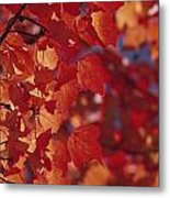 Close-up Of Autumn Leaves Metal Print