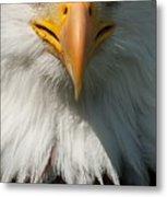 Close Up Of Bald Eagle Metal Print