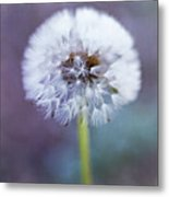 Close Up Of Dandelion Flower Metal Print