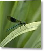 Close-up Of Dragonfly Perched On Leaf Metal Print