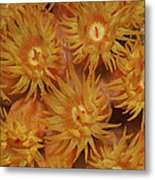 Close-up Of Orange Cup Coral Metal Print
