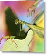 Close-up Of Praying Mantis Metal Print