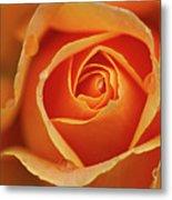 Close Up Of Rose Metal Print