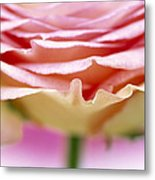 Close Up Of Rose Showing Petal Detail Metal Print