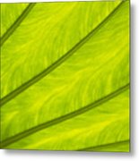 Close-up Of Surface Of A Green Leaf Metal Print