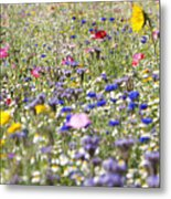 Close Up Of Vibrant Wildflowers In Sunny Field Metal Print