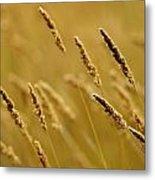 Close-up Of Wheat Metal Print