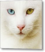 Close Up Of White Cat Metal Print