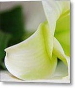 Close-up On White Lilies Metal Print by Gal Ashkenazi