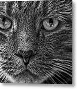 Close Up Portrait Of A Cat Metal Print