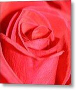 Close-up Rose Metal Print