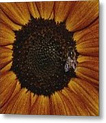 Close View Of A Bee On A Sunflower Metal Print