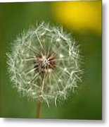 Close View Of A Dandelion Gone To Seed Metal Print