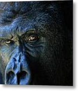 Close View Of A Gorilla Gorilla Gorilla Metal Print