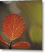 Close View Of A Leaf Metal Print