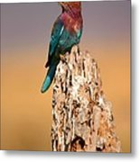 Close View Of A Lilac-breasted Roller Metal Print