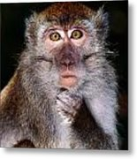 Close View Of A Long-tailed Macaque Metal Print