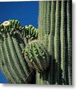 Close View Of A Saguaro Cactus Saguaro Metal Print