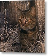 Close View Of A Tabby Cat Metal Print