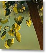 Close View Of A Tree Branch And Leaves Metal Print