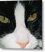 Close View Of Black And White Tabby Cat Metal Print