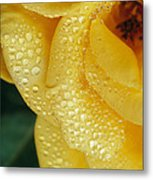 Close View Of Dew On Olympic Gold Rose Metal Print
