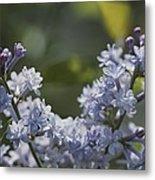 Close View Of Hyacinth Lilacs Syringa Metal Print