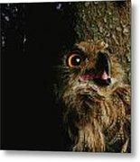 Close View Of Owl Near A Tree Trunk Metal Print