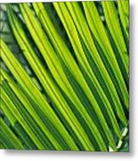 Close View Of Palm Fronds Metal Print