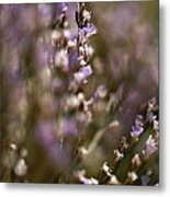 Close View Of Purple Wildflowers Metal Print