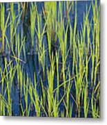Close View Of Water Grasses Growing Metal Print