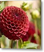 Closeup Of A Red Flower In Butchart Metal Print