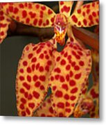 Closeup Of An Orchid, Renanthera Twin Metal Print
