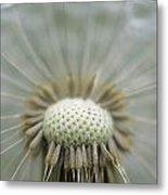 Closeup Of Dandelion Seed Head Metal Print