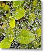 Closeup Of Morning Dew On Leaves Metal Print