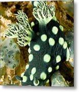Closeup Of Nudibranch Nembrotha Metal Print