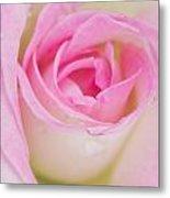 Closeup Pink Rose Metal Print