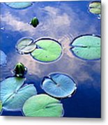 Closing Lilies Metal Print by Catherine Natalia  Roche